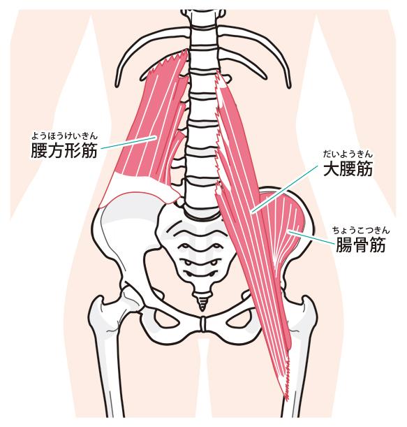 大腰筋の画像